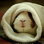 cute-animal-blanket-9-180x180