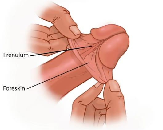 foreskin frenulum